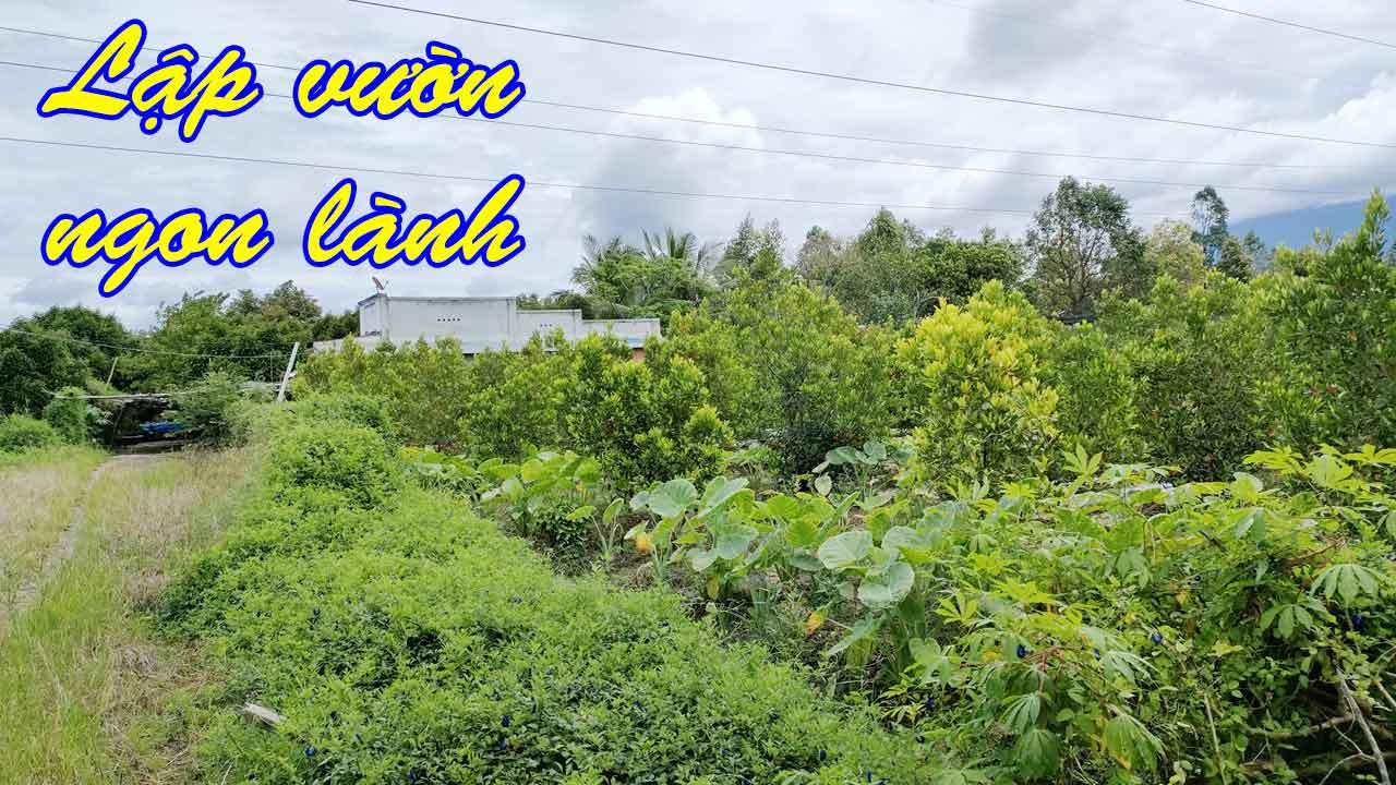 Bán Đất Lập Vườn View Cành Đẹp Video