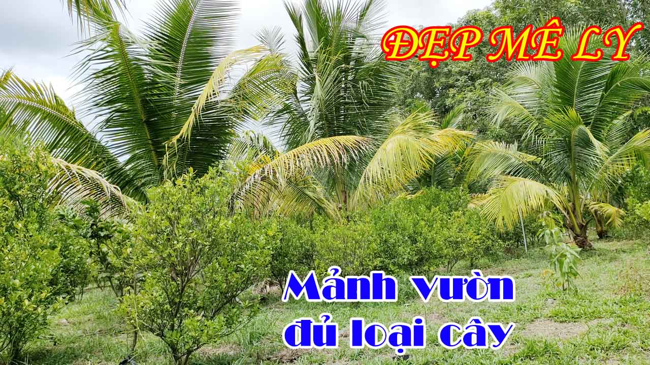 Bán Mảnh Vườn Dừa Đẹp Video